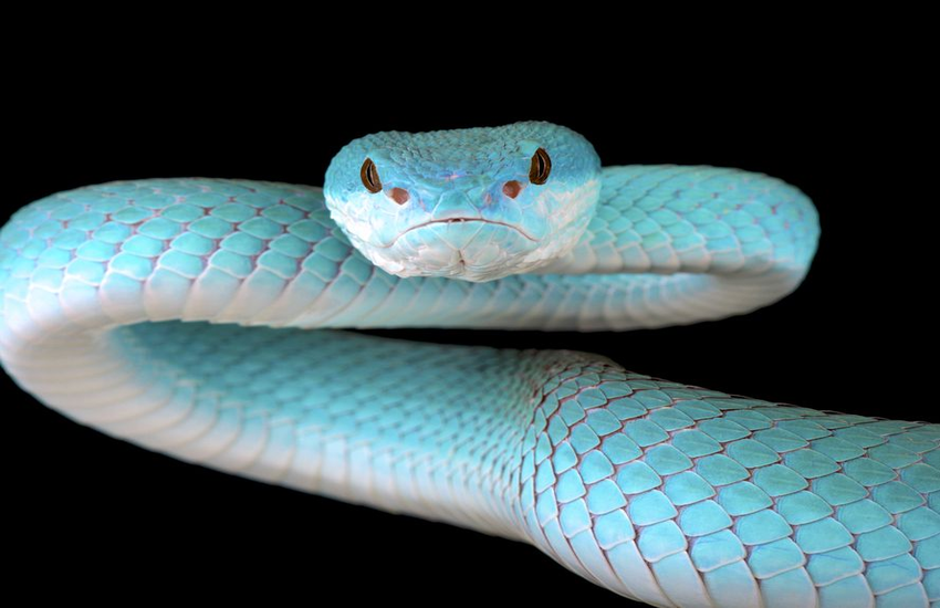 Myths About Snakes